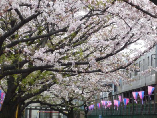 higashi 1.jpg