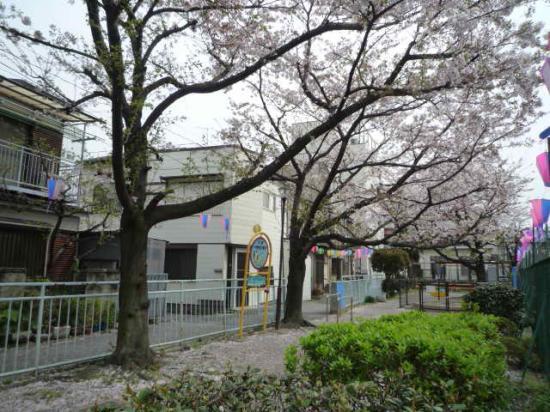 higashi sakura 2.jpg
